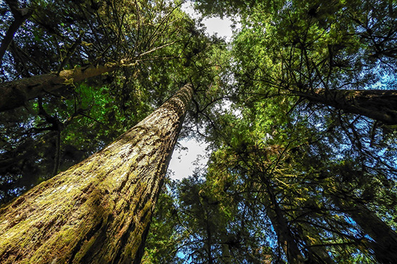 Proposed Changes to Tree Protection Bylaw 2019 No. 5478
